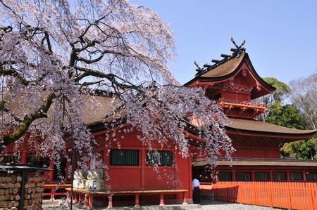 chubu: Shrine and Sakura