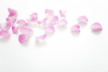 Pétales de rose Banque d'images - 43047830