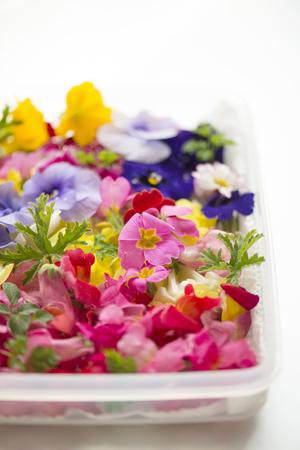 Edible flower Stock Photo