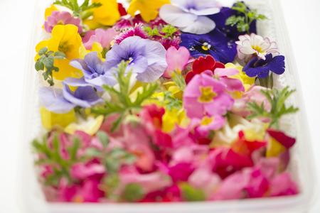 Edible flower 写真素材