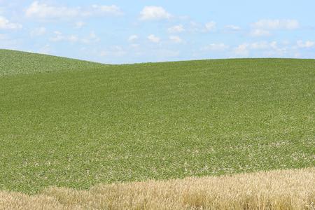 biei: Beat groves and wheat fields of Biei