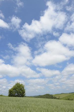 biei: The hills of Biei of blue sky