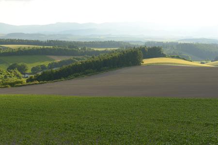 cropland: Hills of Biei