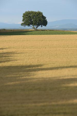 biei: Field of biei in Hokkaido wheat