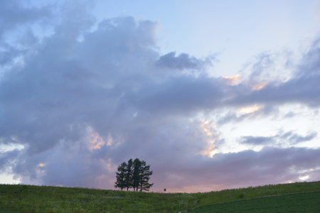 grandeur: Tree sunset sky and storm Stock Photo