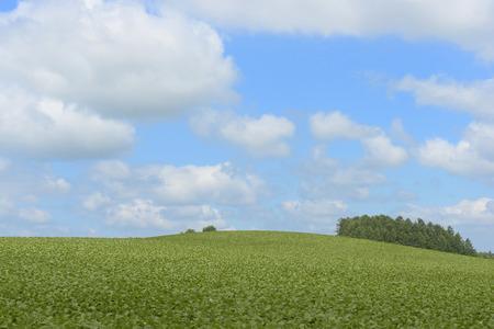 biei: Beat field of Biei of blue sky