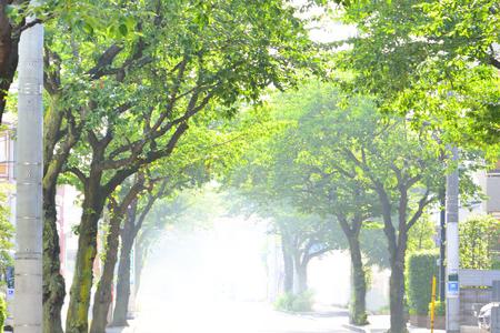 hot summer: Road on a hot summer day Foto de archivo