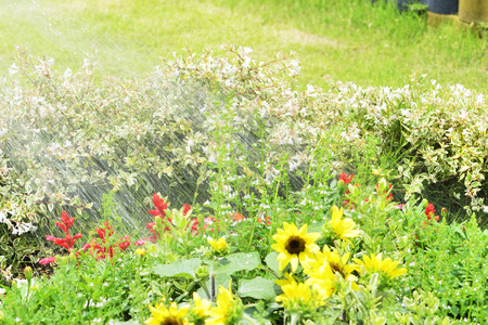 turf flowers: Watering to flower beds Stock Photo