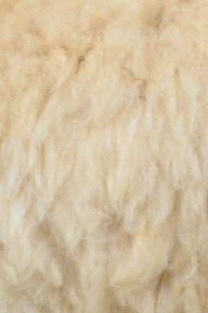 alpaca: Alpaca hair