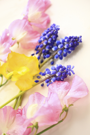 sweet pea: Muscari and sweet pea