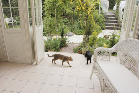 conservatory: Conservatory and cat
