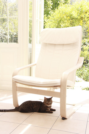 conservatory: Chair of the Conservatory and the cat