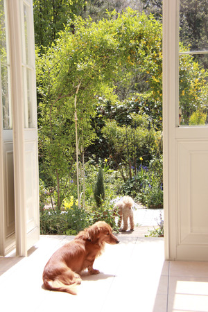 conservatory: Conservatory and dogs Stock Photo
