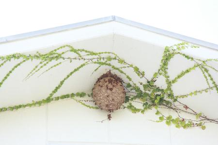 beehive: Big beehive Stock Photo