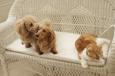 Good friend dog and cat