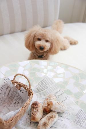 自家製パンとおもちゃのプードル 写真素材