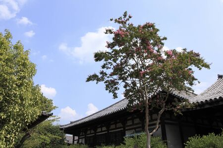 myrtle: Crape myrtle of Gangoji Temple Stock Photo
