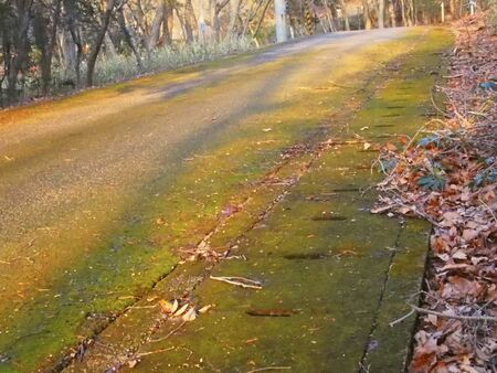 culvert: Road that remains of fallen leaves