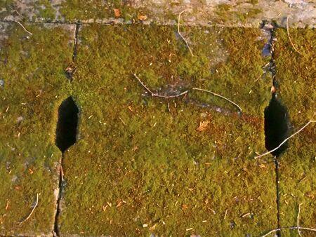 culvert: The mossy culvert Stock Photo