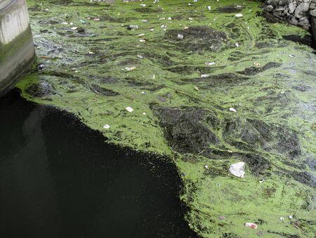 その停滞の川の藻