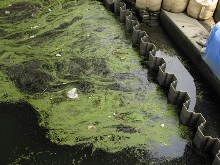 stagnation: Algae of rivers that stagnant