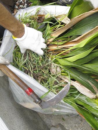 ガーデン クリーニング バランと鎌