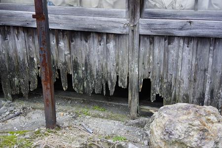 wainscot: It damaged a deserted house wainscot