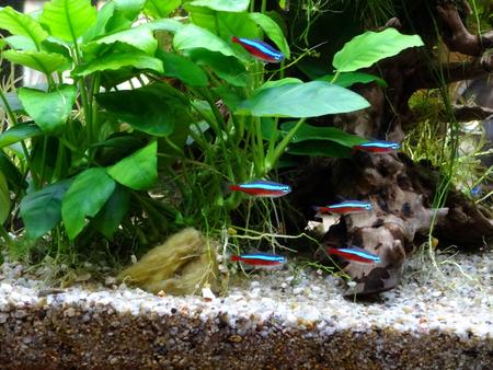 熱帯魚の水槽 写真素材