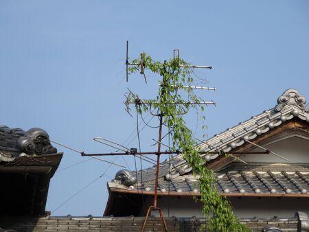 tv antenna: TV antenna vines entangled Stock Photo