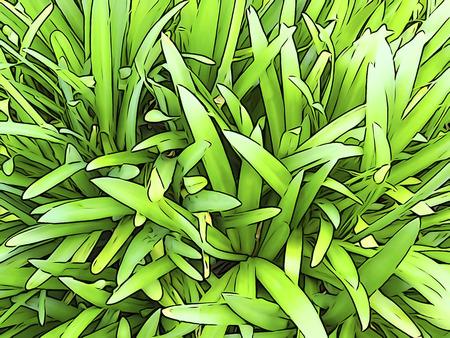 植物のイラスト トーン