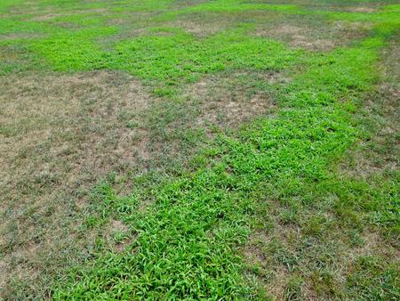 雑草に占領された芝生