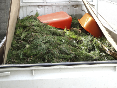 laden: Pine needle that was pruning is laden to light trucks Stock Photo