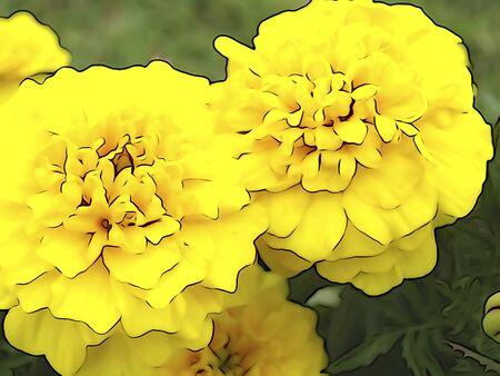 花のイラストのトーン 写真素材