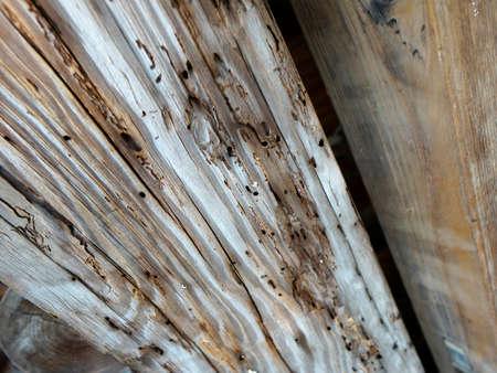 weevils: Beams of weevils