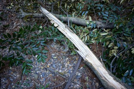 natural disasters: Tree was broken by natural disasters Stock Photo