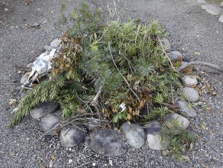 フィールドをゴミの野焼き 写真素材