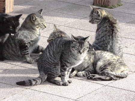 feral: Feral Cat basking