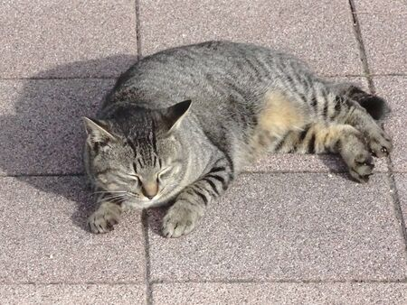 basking: Feral Cat basking