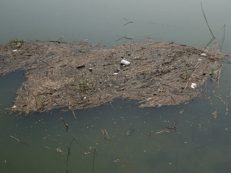 deficiencies: Water pollution of water sources pond by administrative deficiencies Stock Photo