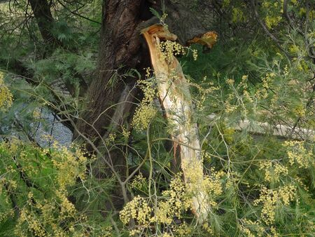 relent: Damage of trees caused by natural disasters