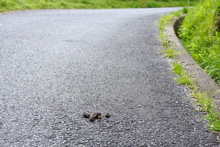 shit: Shit of the left dogs in the road Stock Photo