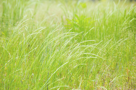 viento soplando: Wind blowing in grassland