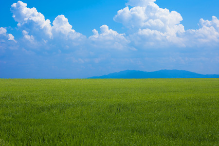 Grasslands and blue skies and summer clouds. Stock Photo