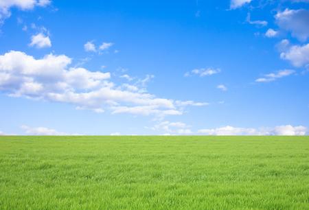 Gras en blauwe lucht en wolken