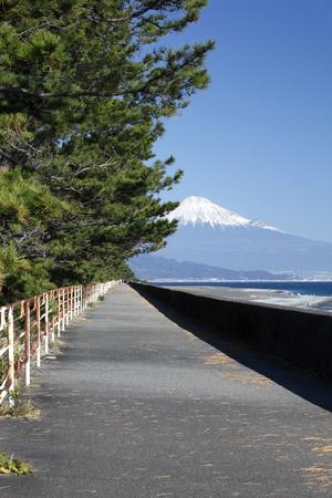 landscape: Mihonomatsubara and Fuji