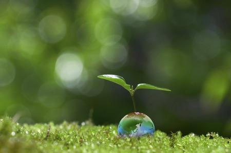 エコロジー 写真素材