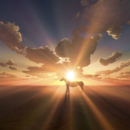 dawning: Horse and sunrise