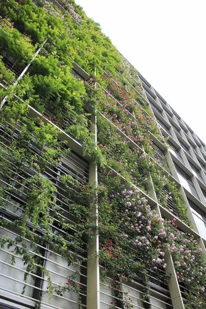 greening: Wall greening building Stock Photo