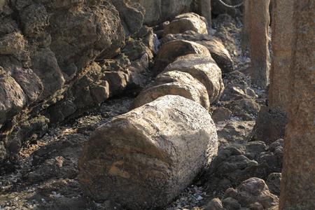 fossil record: Hobashira