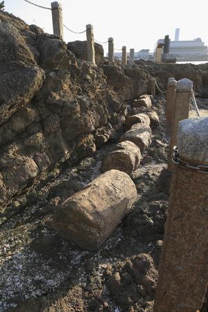 petrified fossil: Hobashira